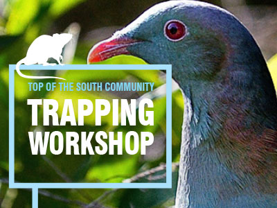 pest trapping workshop promo